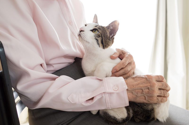 A senior or elderly person holding a cat on their lap