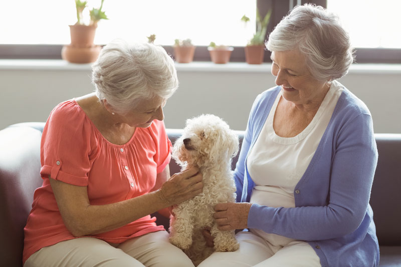 Two senior women sitting on a couch and petting a poodle sitting between them